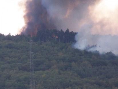 feux forêt 1