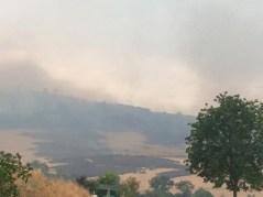 feux forêt V2