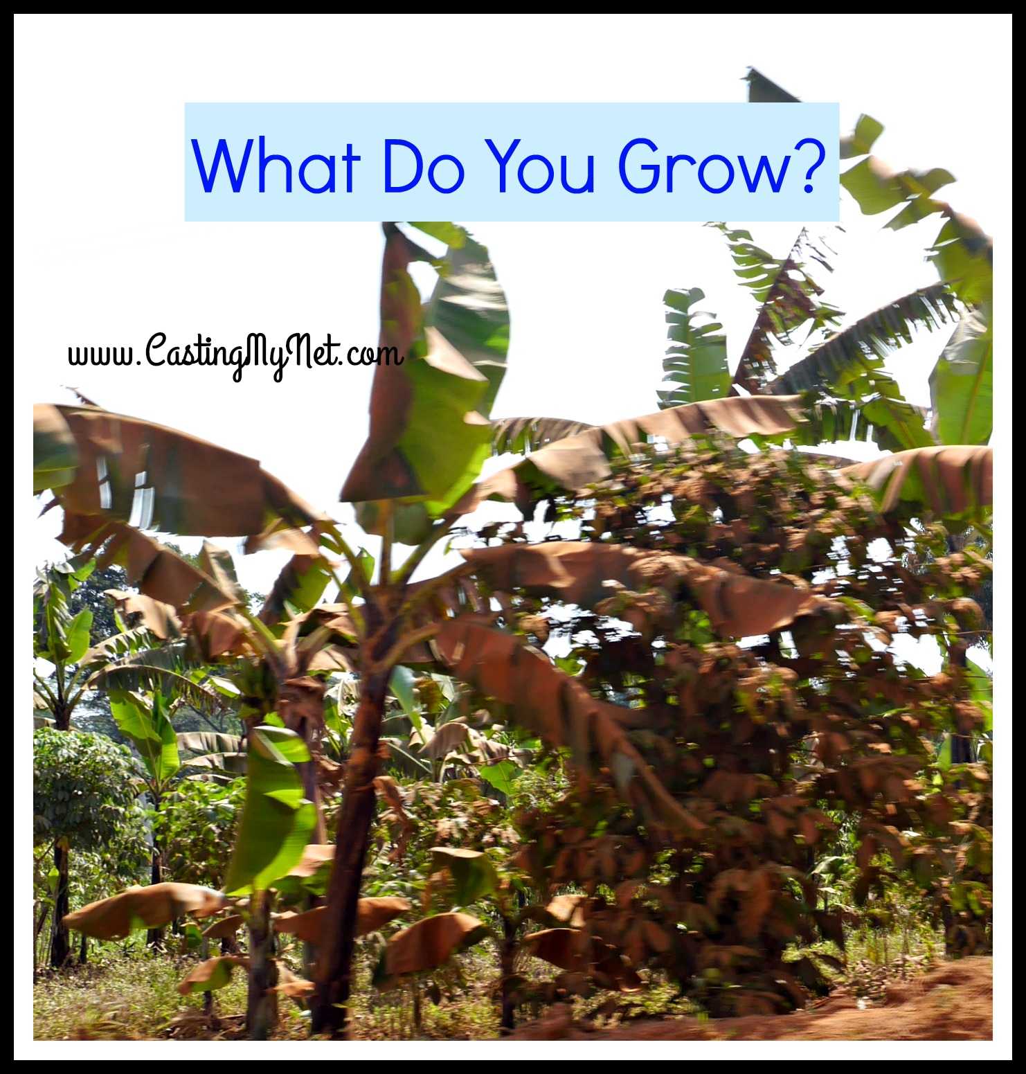 What do you grow?