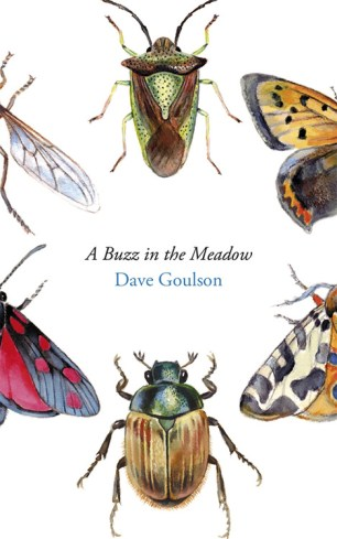 A Buzz In The Meadow by Dave Goulson; James Paul Jones; illustration Louise Bird (Jonathan Cape / September 2014 )