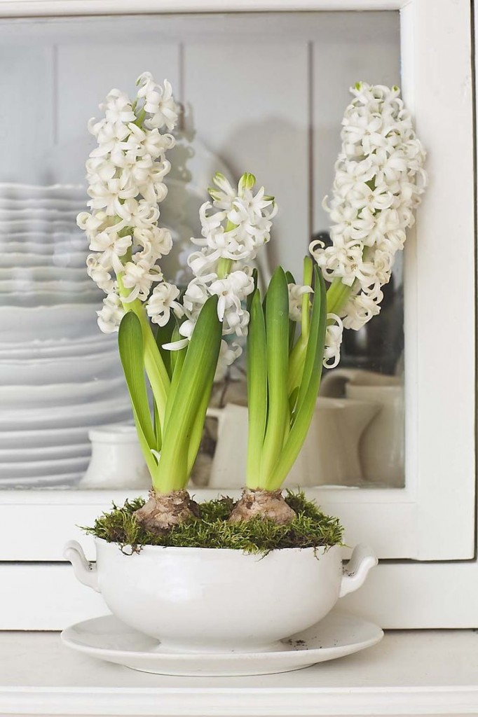 A-Spring-Time-Favourite-The-Hyacinth_10
