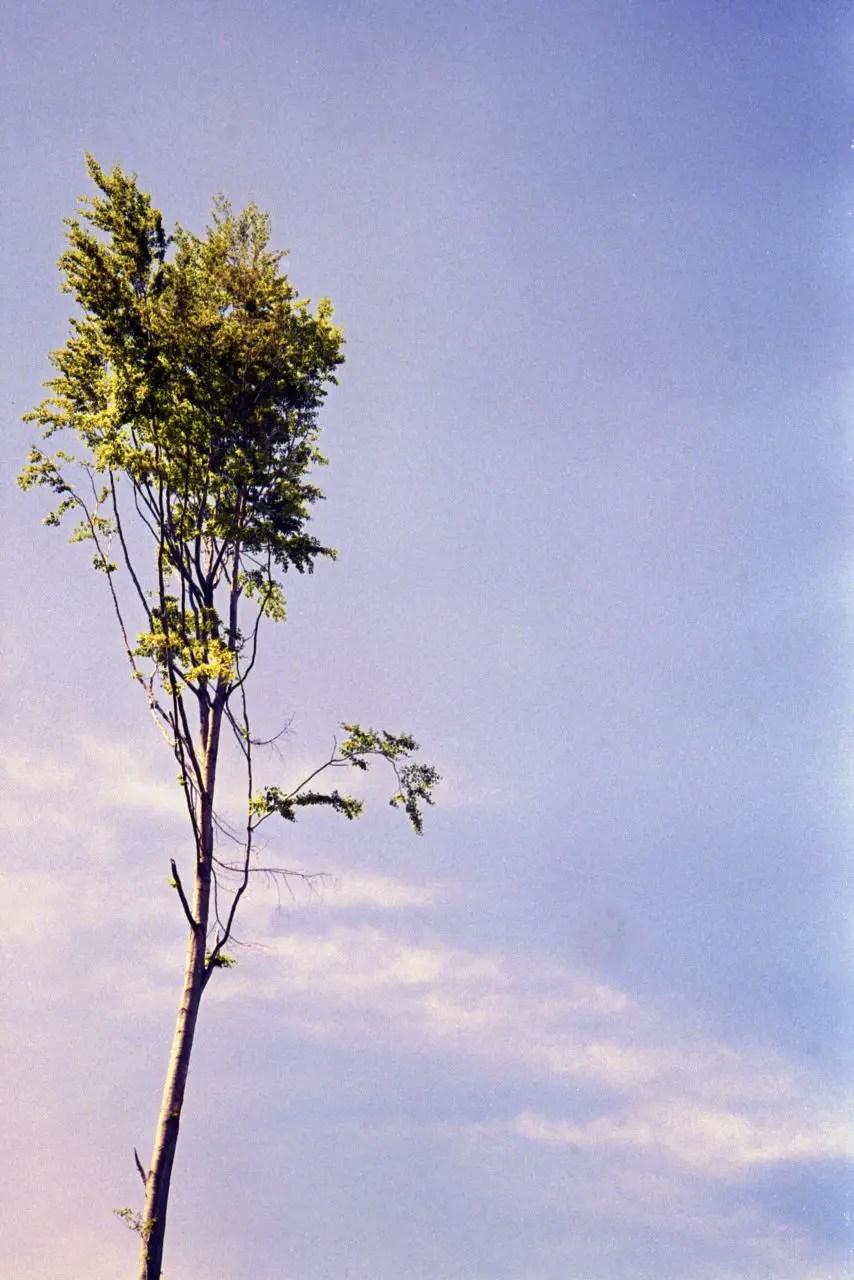 luca-ellena-002