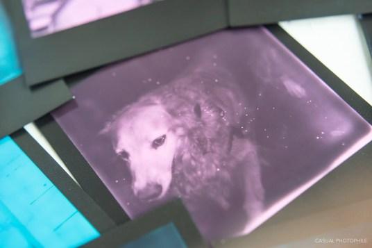 polaroid originals duochrome film shots-5