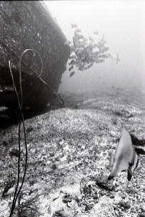 Nikon Nikonos 35mm samples Meeda Khalifa (4 of 9)