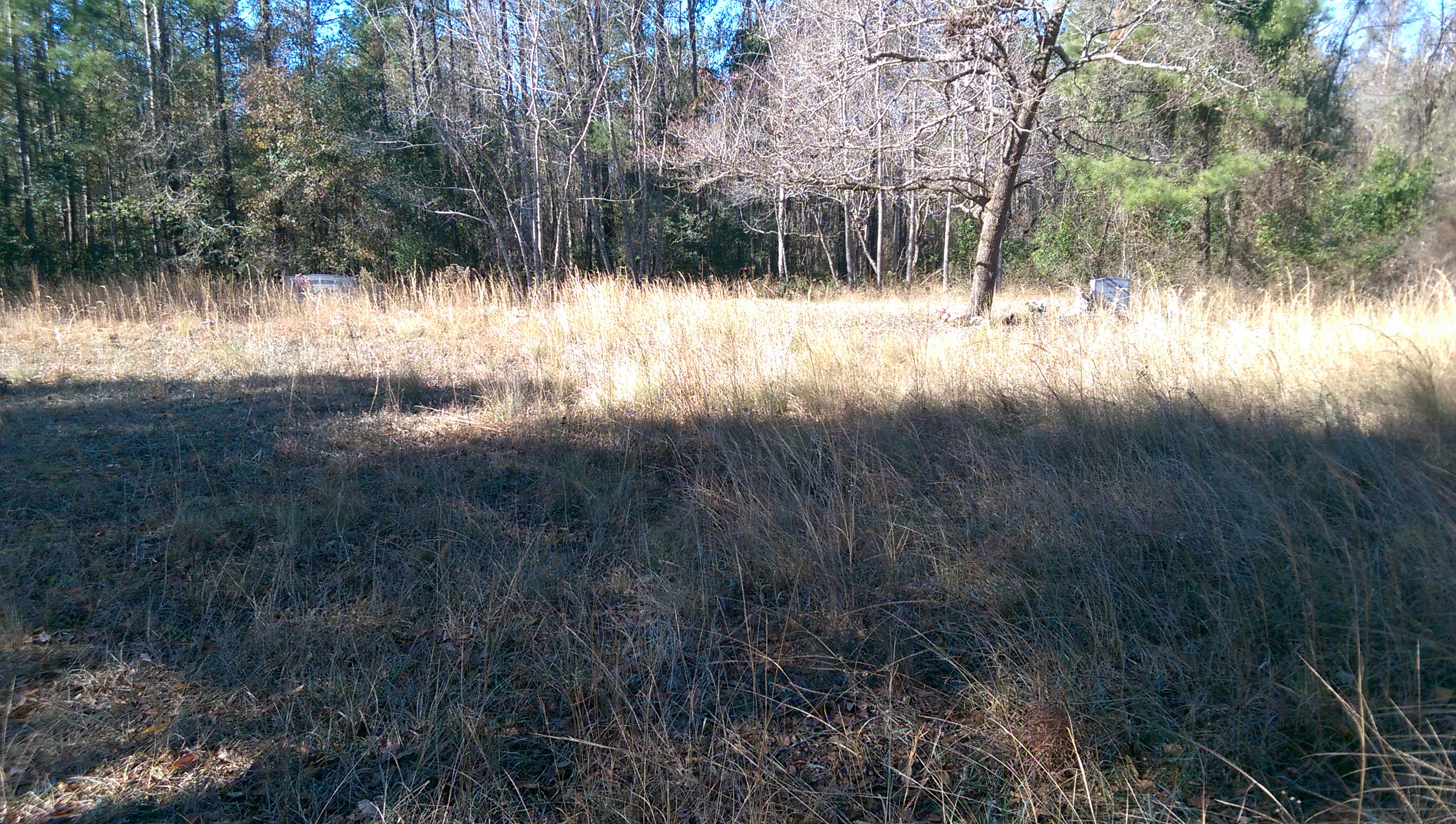 Underbrush In Owen Park Is So Dense Its >> Friends Of Fort Caswell Rifle Range Inc Page 5
