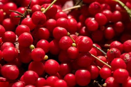 Schisandra chinensis – La fruta de los cinco sabores