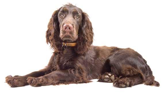 Venta de alimentos y accesorios para perros