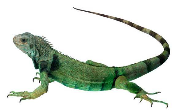 Venta de alimentos y accesorios para reptiles.