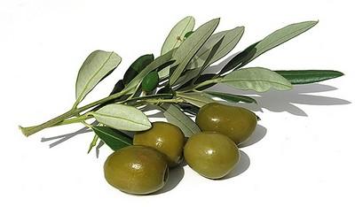 Gran oferta en Olivos arbustivos columnares.
