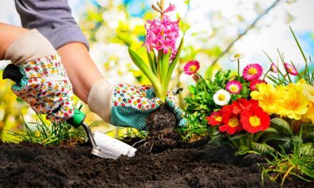 Consejos de seguridad y salud en jardinería.