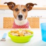 Perros con estómago delicado: cómo cuidarlos