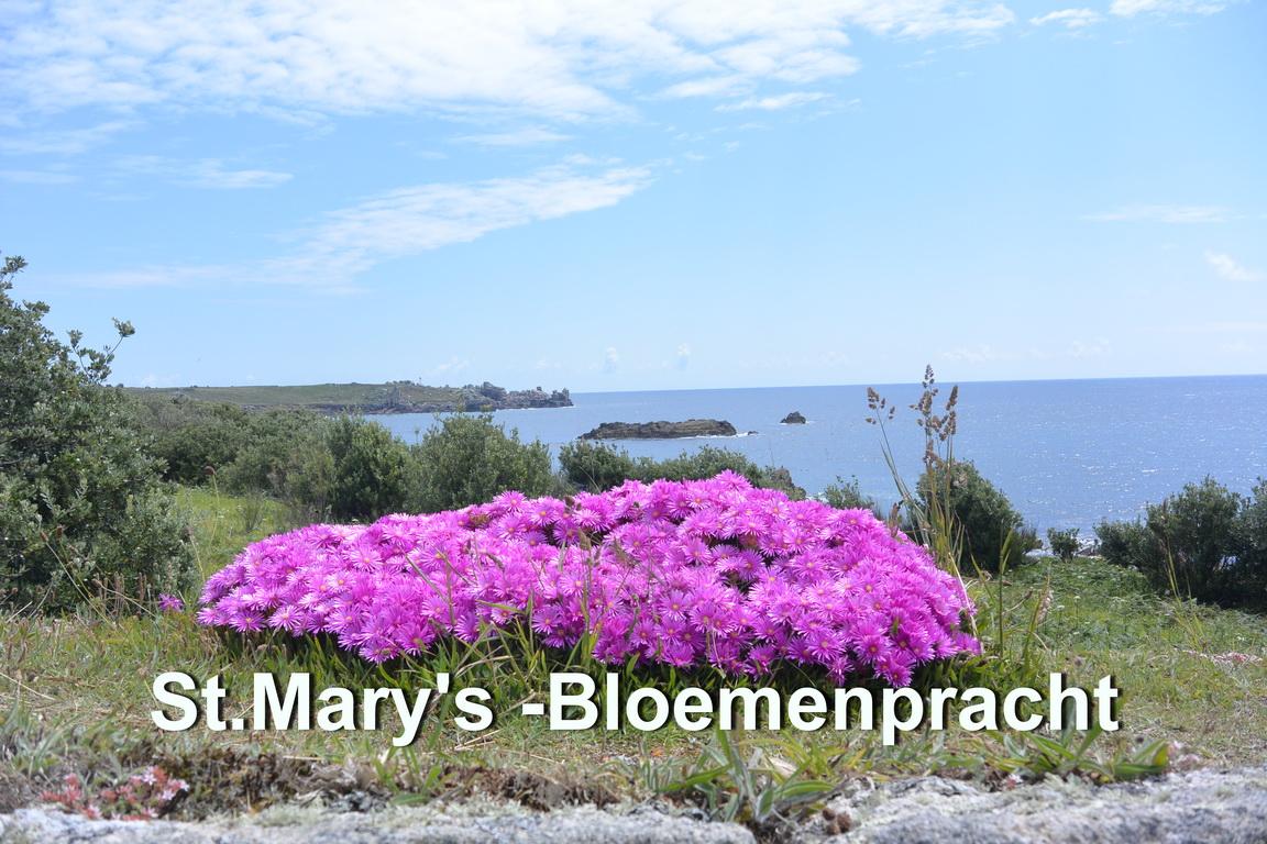 St.Mary's - Bloemen3