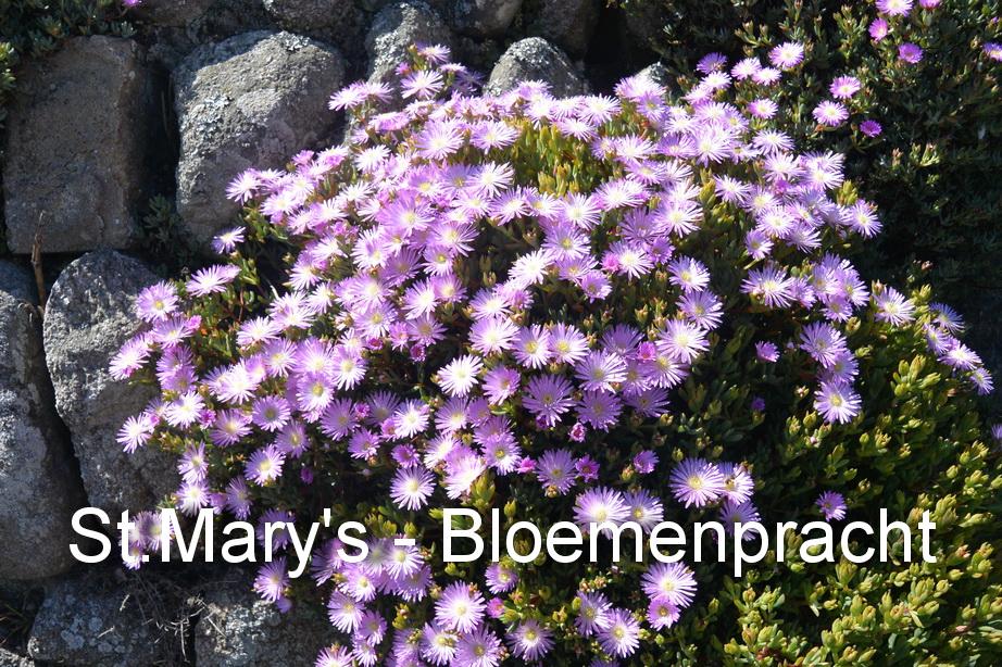 St.Mary's - Bloemen4