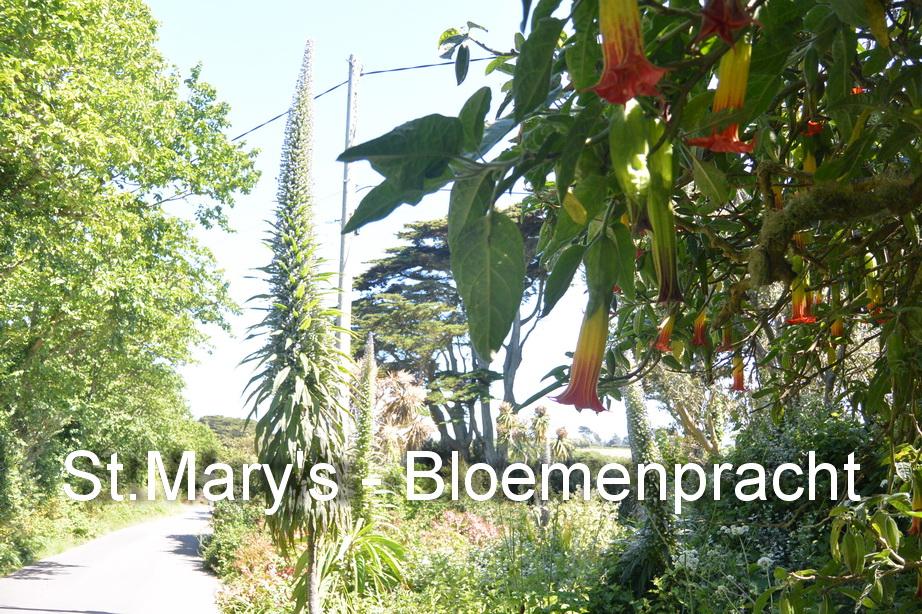 St.Mary's - Bloemen5
