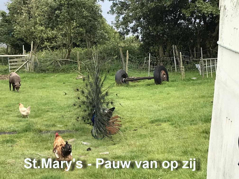 St.Mary's - Pauw2