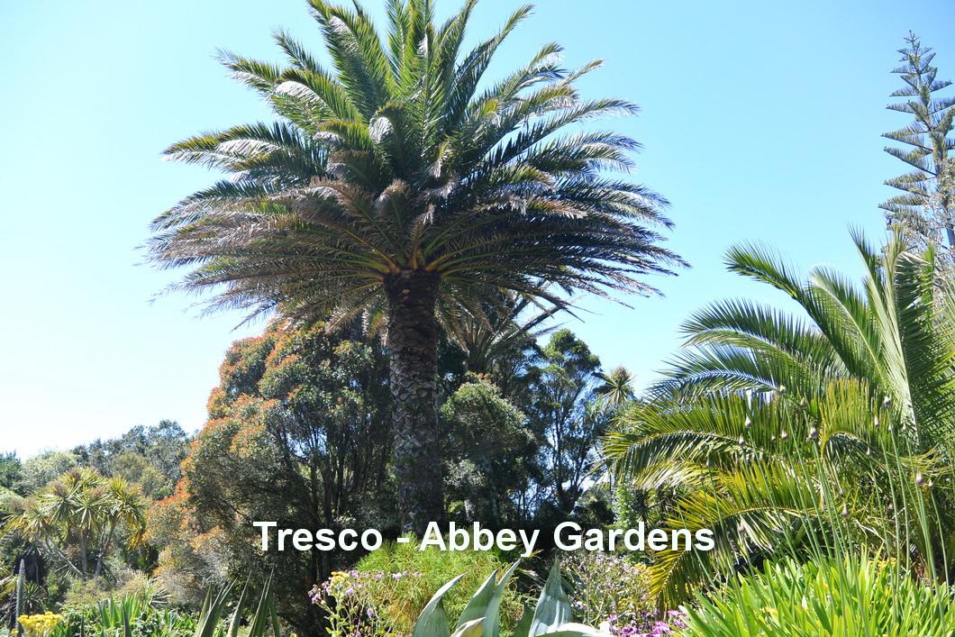 Tresco - Abbey gardens1