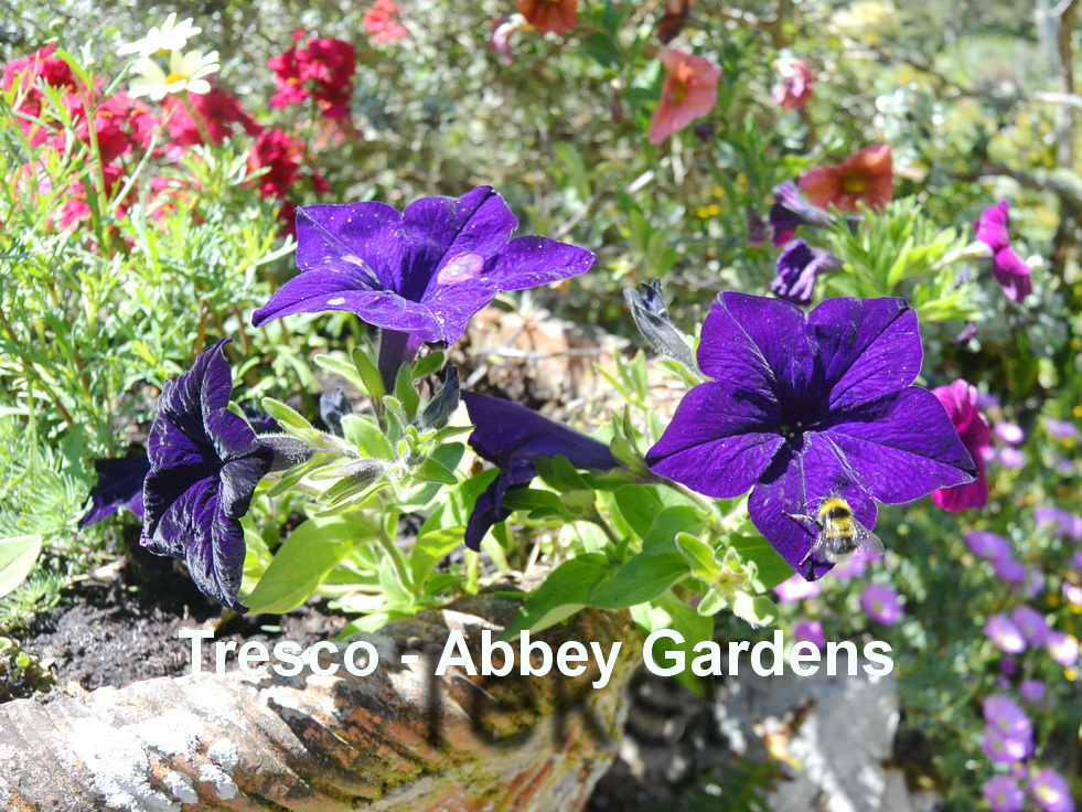 Tresco - Abbey gardens3