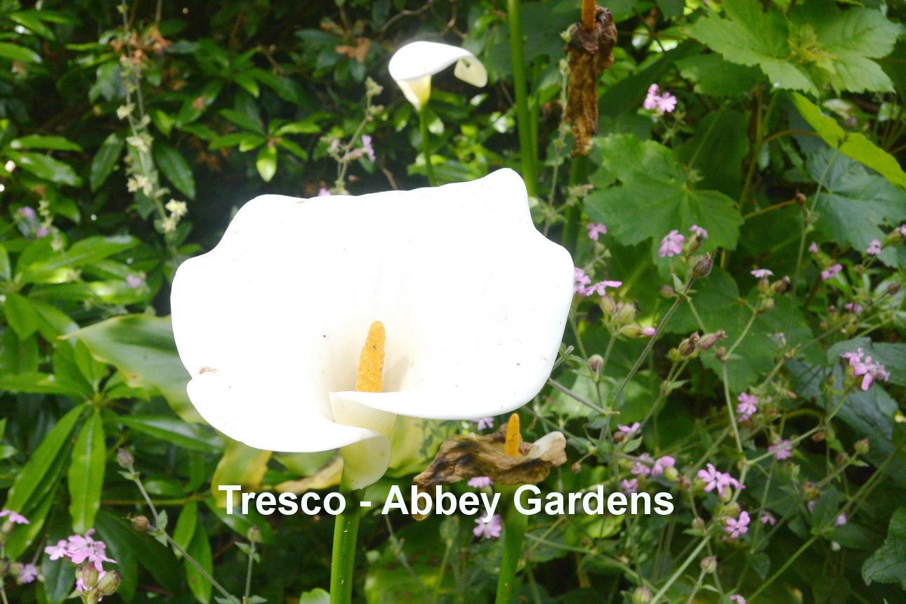 Tresco - Abbey gardens9