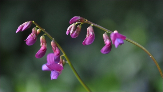 Smuk lille blomst