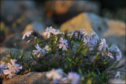 Stenbedsplanter