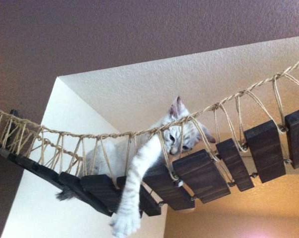 Indiana Jones Cat Bridge ⋆ Catastrophic Creations
