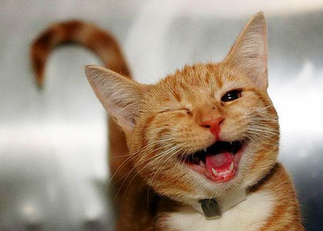 Image result for laugh cat
