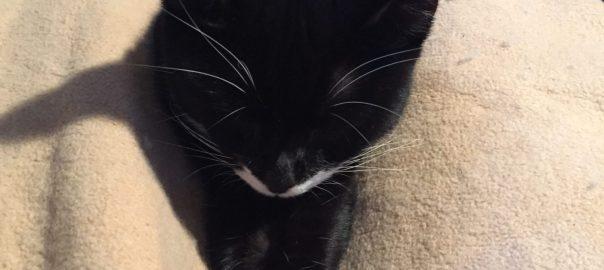 Little Katze at rest