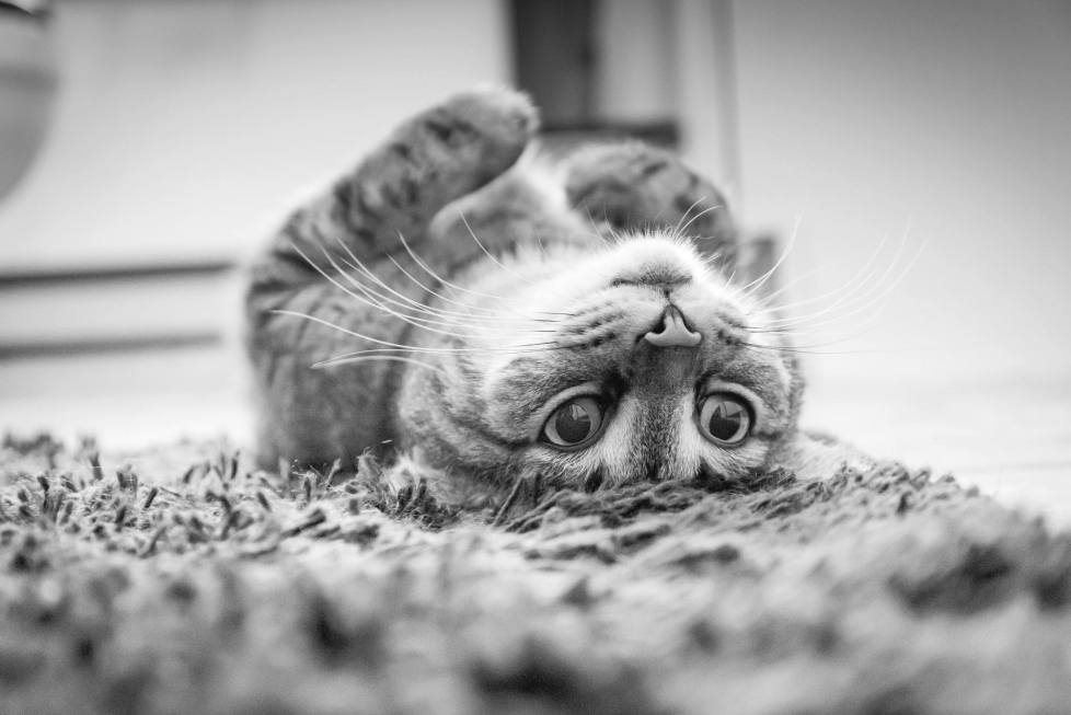 How to housebreak a cat