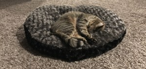 eevee on urban feline cat bed