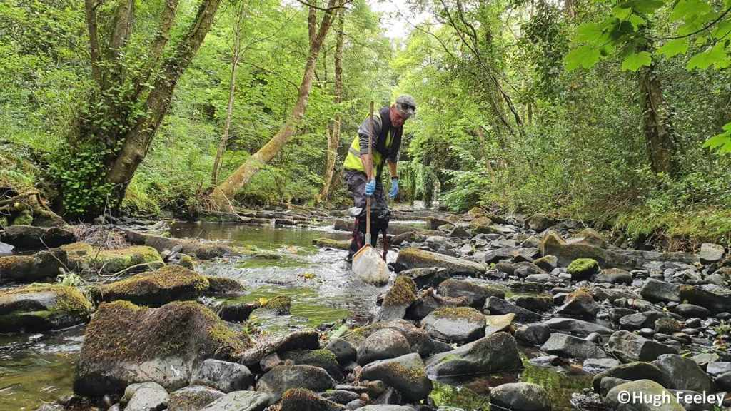 Collecting a macroinvertebrate sample from the River Owenass, Co. Laois, Ireland.