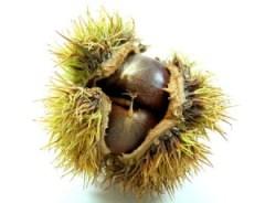 my fuzzy nuts
