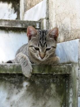 Relaxed kitten - 3 by johntgr