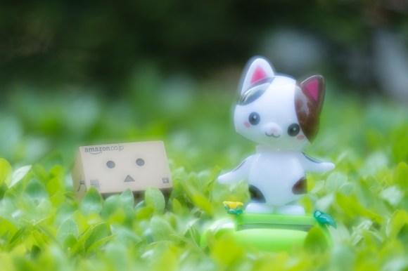 Danbo has fallen love with cute kitty