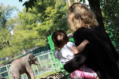 Syracuse Zoo Asian Elephant Preserve