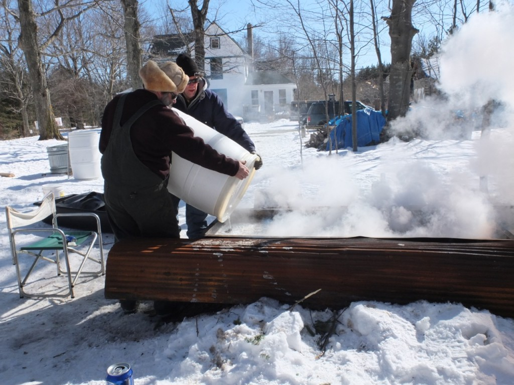 Maple sugaring time - harvested sop is being poured into the evaporator