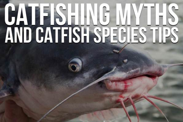 Catfishing Myths and Species Tips