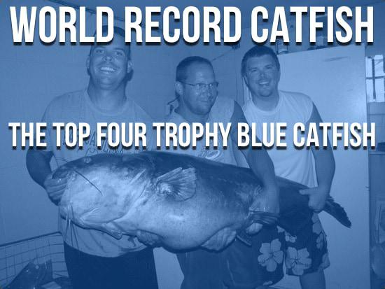 World Record Catfish The Largest Catfish Ever Caught