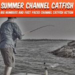 Summer Channel Catfish Cover Catfish Edge
