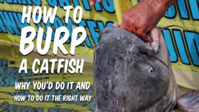 How To Burp a Catfish