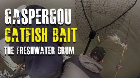 Gaspergou Catfish Bait