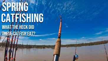 Spring Catfishing