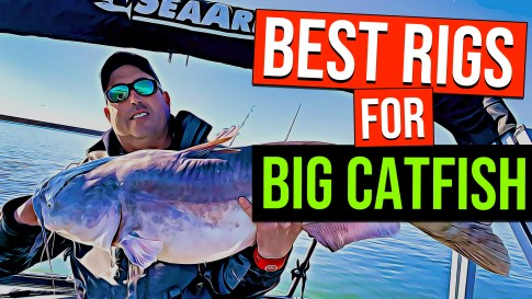 best catfish rigs big catfish