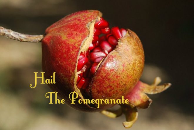 autumn is pomegranate time