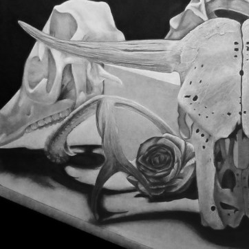 Drawing I class project - bones still life in charcoal.