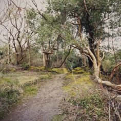 Glengariff, a path to Lady Bantry's View