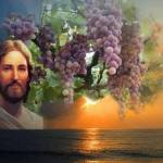 YEAR B: HOMILY FOR THE FIFTH SUNDAY OF EASTER (7)