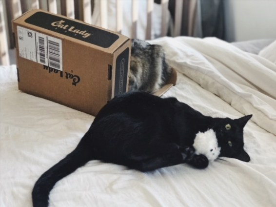 CatLady Subscription Box Review