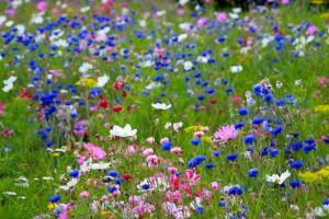 wild flowers public domain