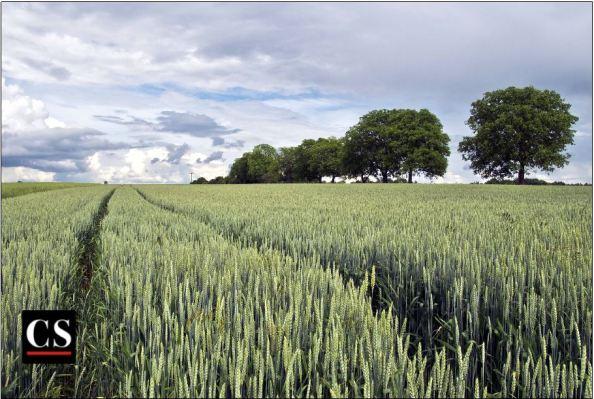 seed, bumper crop