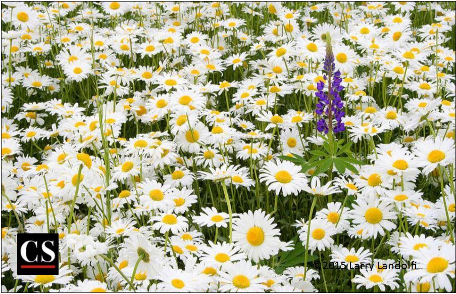 nature, creation, flower